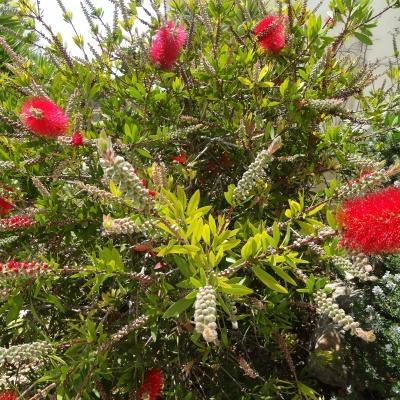 Tuinplant